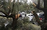 Avustralya'daki fırtına 40 bin ev ve iş yerini elektriksiz bıraktı