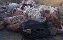 Demirhan'da bin 603 Kg kaçak et ele geçirildi