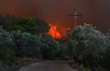 Yunanistan'da son günlerde artan aşırı sıcaklarla çıkan orman yangınları