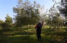 İskele'de çam kese böceği ile mücadele