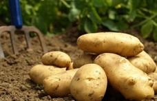 Patates alanları için itiraz veya belge sunma süresi uzatıldı