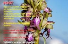 """""""Orkide Vadisi Orkide Gözlem Yürüyüşü""""nün 10.su yapılacak"""