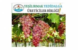5. GELENEKSEL VERİGO FESTİVALİ 8-9 EYLÜL'DE...