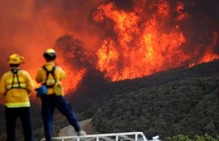 California'daki yangınlarda can kaybı 81'e...
