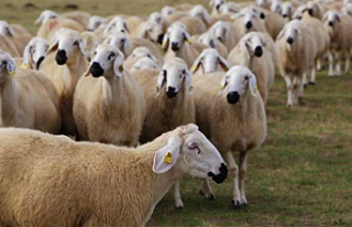 Veteriner Dairesi'nden üreticilere çağrı