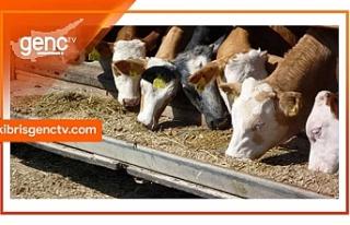 Hayvancılık Dairesinden açıklama