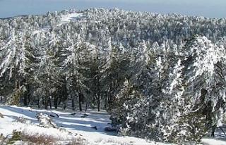Trodos'ta kar kalınlığı 15 santim