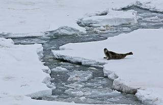 Buzul örtüsünün erimesi tonlarca metan gazını...