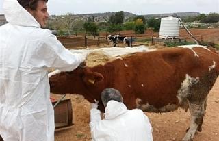 Hayvan üreticilerine yönelik bilgilendirme toplantıları...
