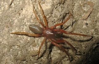 Kıbrıs'ta dünya için 2 yeni örümcek türü...