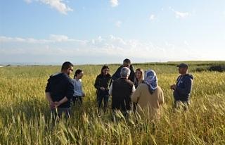 Tarım Dairesi'nde Kalavaç'da eğitim