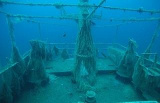 Batık gemi canlılara ev sahipliği yapıyor