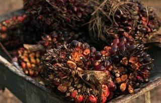 Endonezya ve Malezya'dan AB'ye palm yağı...