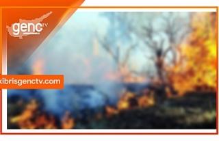 Beyköy'de 100 dönüm arazi yandı