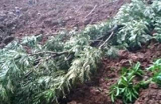 Uganda'da toprak kayması nedeniyle en az 5 kişi...