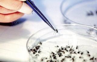 İki Toplumlu Sağlık Komitesi, Batı Nil Virüsü...