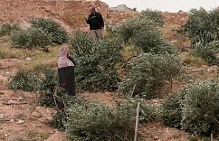 İsrail işgal altındaki Filistin topraklarında...