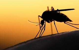 Sıtma parazitleri Güneydoğu Asya'da hızla...
