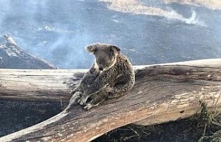 Avustralya'da yangınlar nedeniyle acil durum...