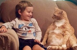 Kediler de köpekler gibi sahipleriyle bağ kuruyor