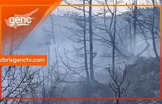 Orman Dairesinden Kantara yangını ile ilgili açıklama