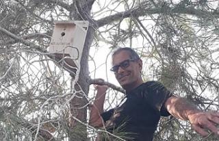 Ormanlara kuş yuvası