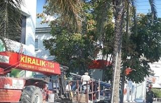 Hurma ağaçlarının izinsiz toplayanlar polis şikayet...
