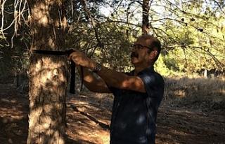 Salamis ormanlarına kuş yuvası yerleştirme devam...