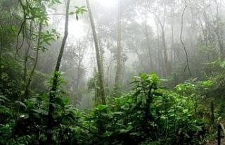 Amazon'daki ormansızlaşma 2008'den bu...