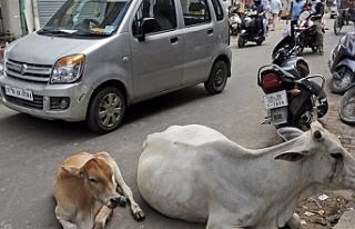 Hindistan'da inek kaçırdıkları iddiasıyla...