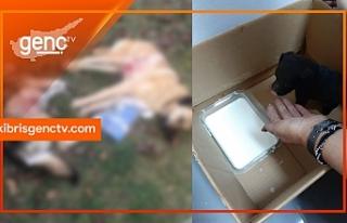 Beyarmudu'nda köpek katliamı... Anneleri zehirlenen...