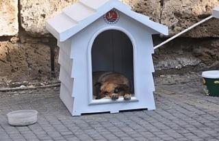 Girne Belediyesi köpekler ile ilgili çalışmalarını...