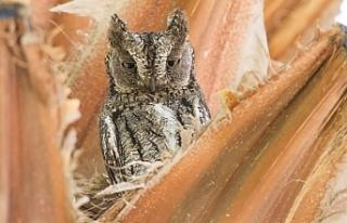 Sadece Kıbrıs'a özgü üçüncü bir endemik...