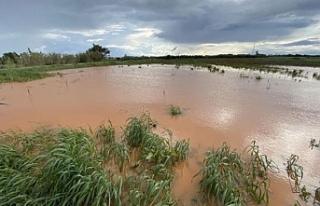 Güneyde tonlarca patates suya gömüldü