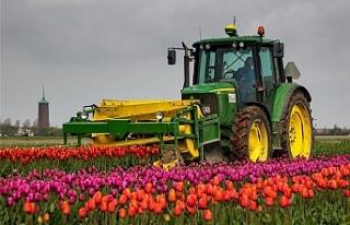 Hollanda tarım ürünleri ihracatında rekor kırdı:...