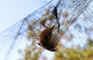 344 kuş ağlardan canlı olarak kurtarıldı