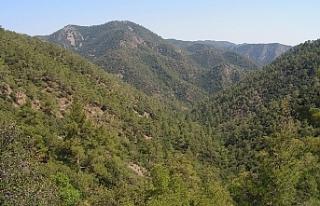 Güneyde taşocağı için 20 bin ağacın kesilmesi...