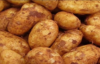 Sonbahar Patates alanları için cuma mesai bitimine...
