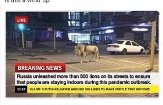 Putin'in İnsanların evde kalması için 800 aslanı...