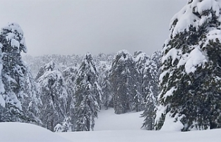 Trodos'a kar yağdı