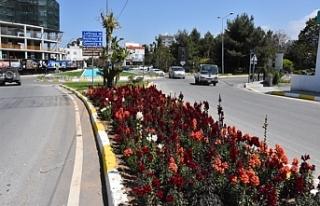 Girne'de yangına karşı yabani ot temizliği