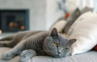 'Koronavirüsten korumak için kedilerinizi evde...