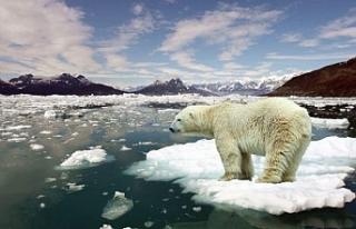 Kuzey Buz Denizi'nde 2050'ye kadar yaz mevsiminde...