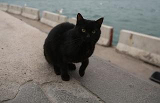 Vietnam'da siyah kedileri öldürüp 'Kovid-19'a...