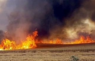 Serdarlı'da yeni yangın çıktı