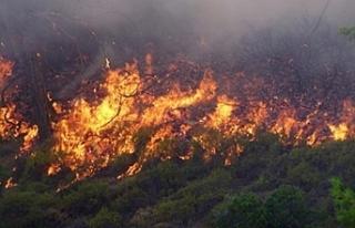 Güney Kıbrıs'taki yangın kontrol altına alındı