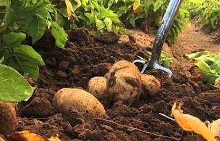 Patates beyanları 30 Ekim'e kadar
