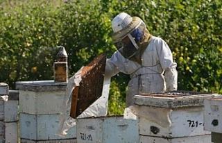 """Tarım ve Doğal Kaynaklar Bakanlığı: """"Arıcılar..."""