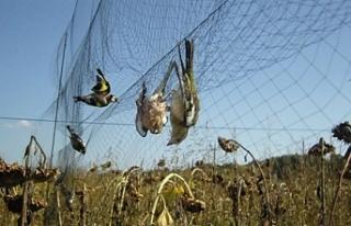 Yüzlerce pulyayı Güney Kıbrıs'a geçirmeye...