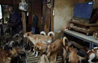 30 metrekarelik evde 164 köpek ile yaşayan aile...